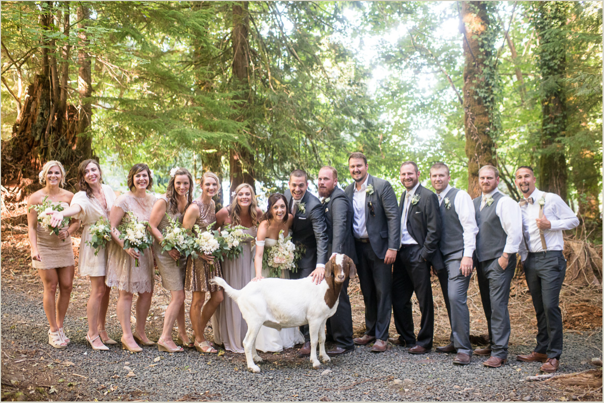 Wedding Party Photobombed by a Goat