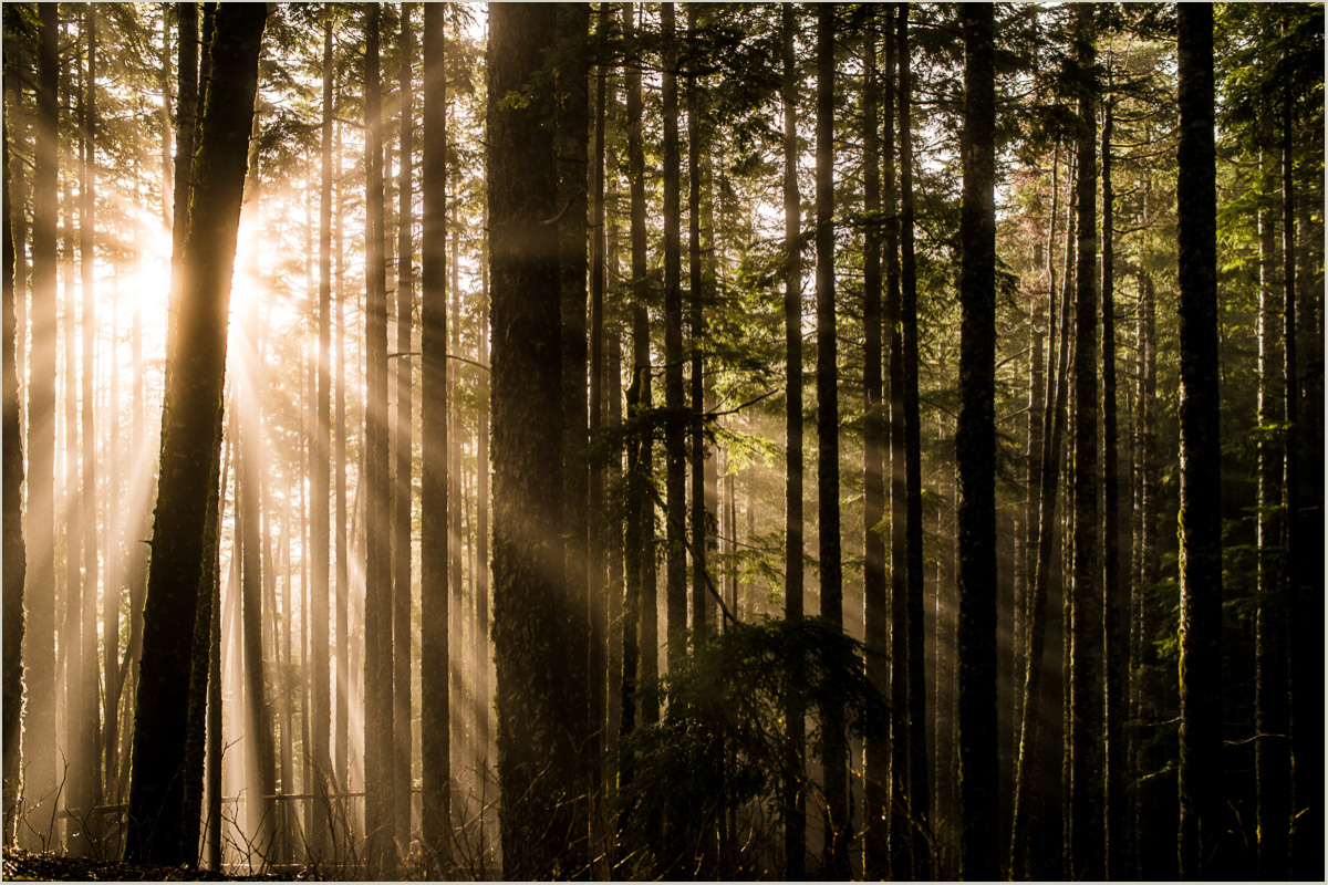 Sunlight filtering through trees in Olympic National Park