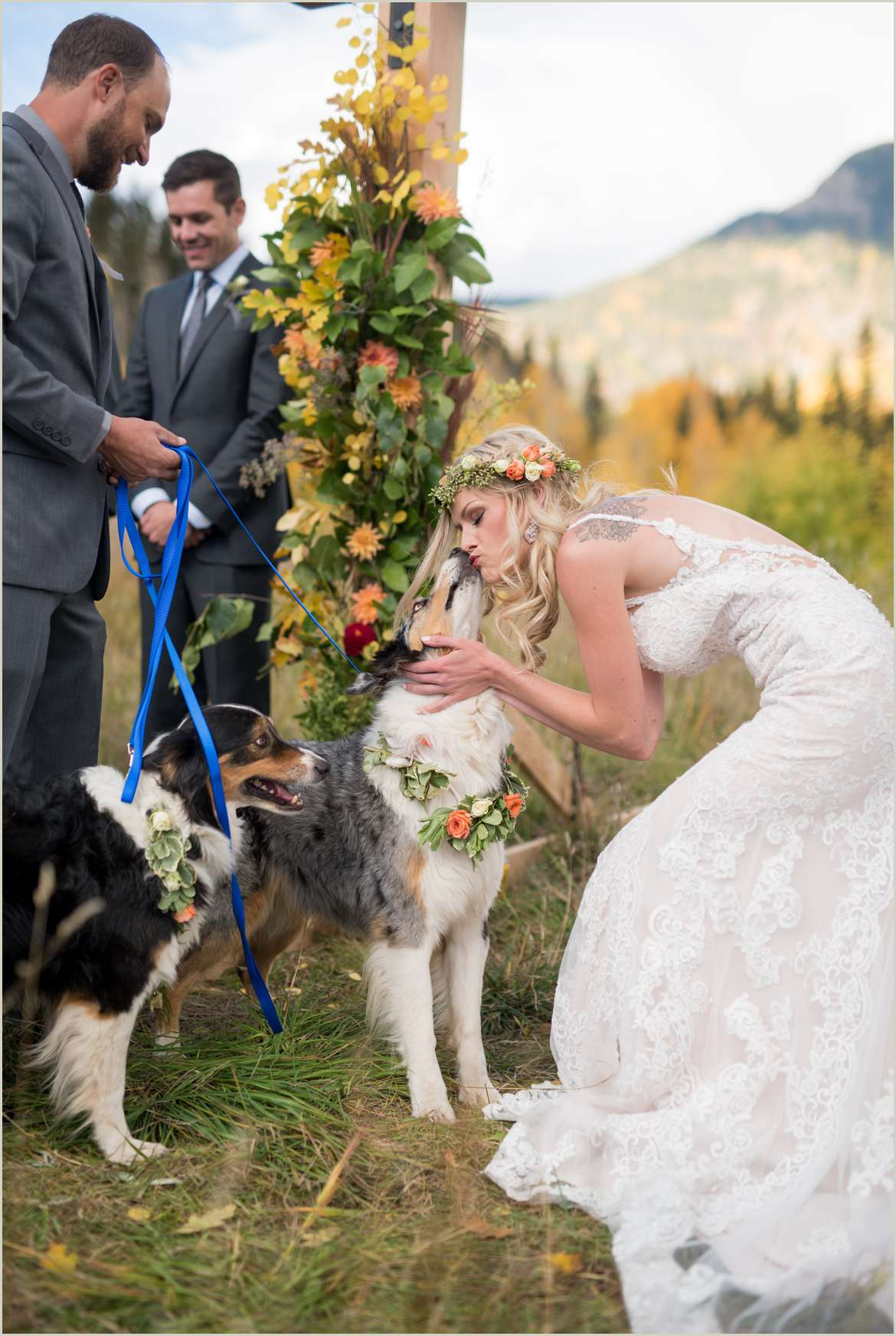 dog gives bride a kiss during wedding