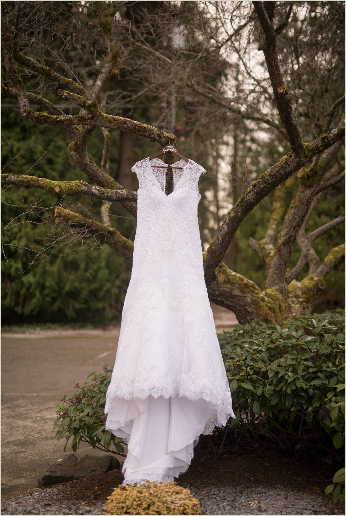 dress hanging in mossy tree