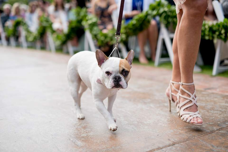 couples who include their dog in their wedding day