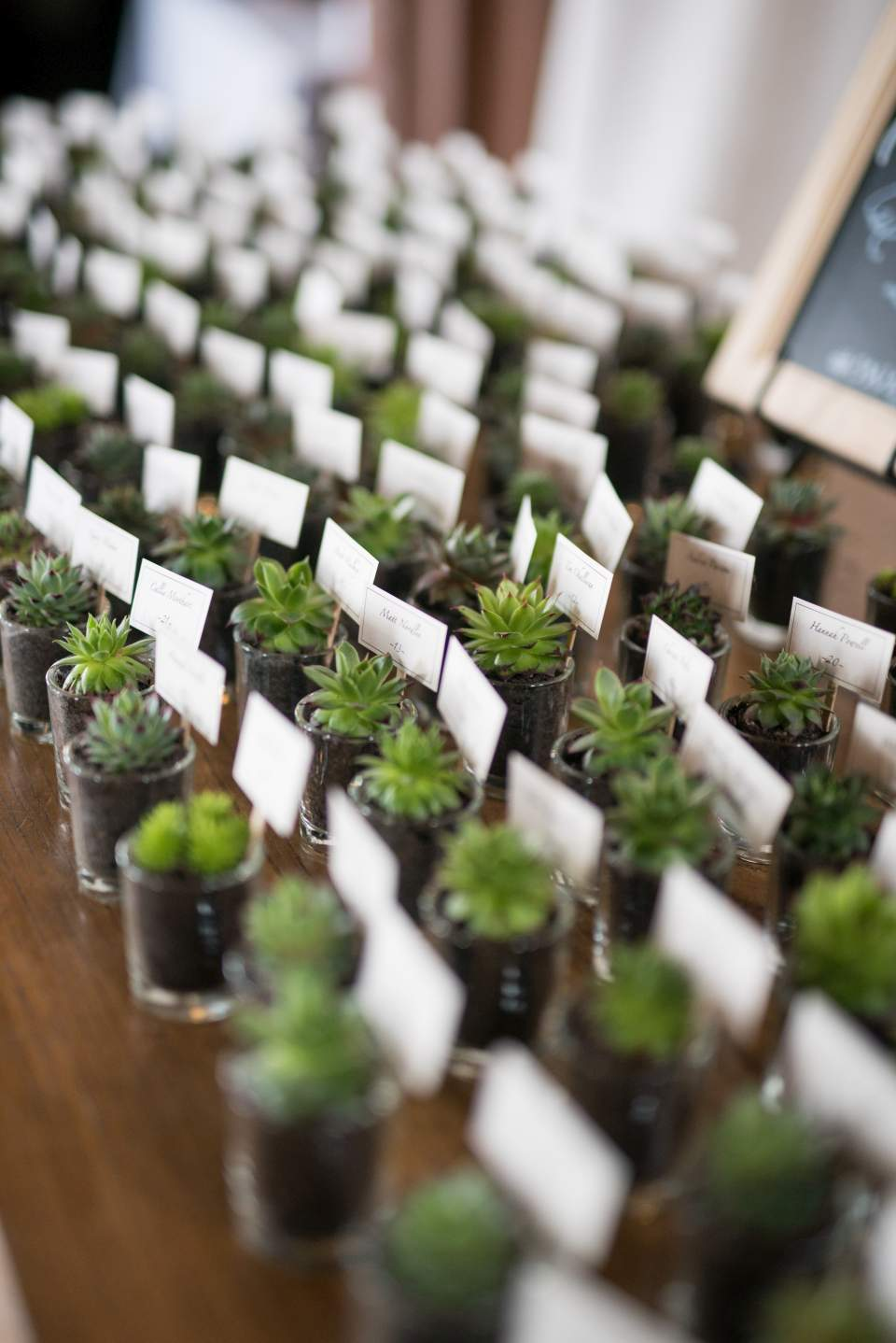 potted succulents as escort cards for wedding guests