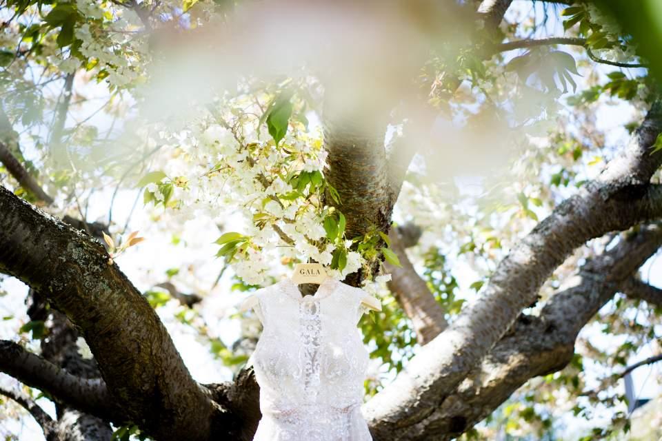 wedding dress hanging in flowering tree in seattle