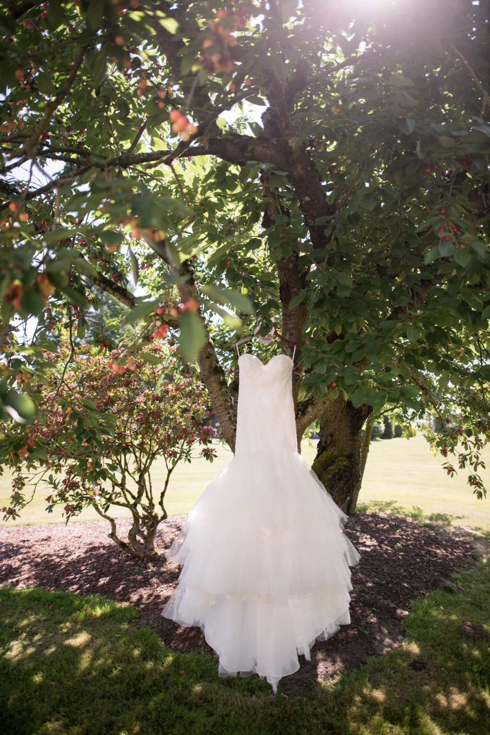 brides dress hanging in apple trees at maplehurst farm