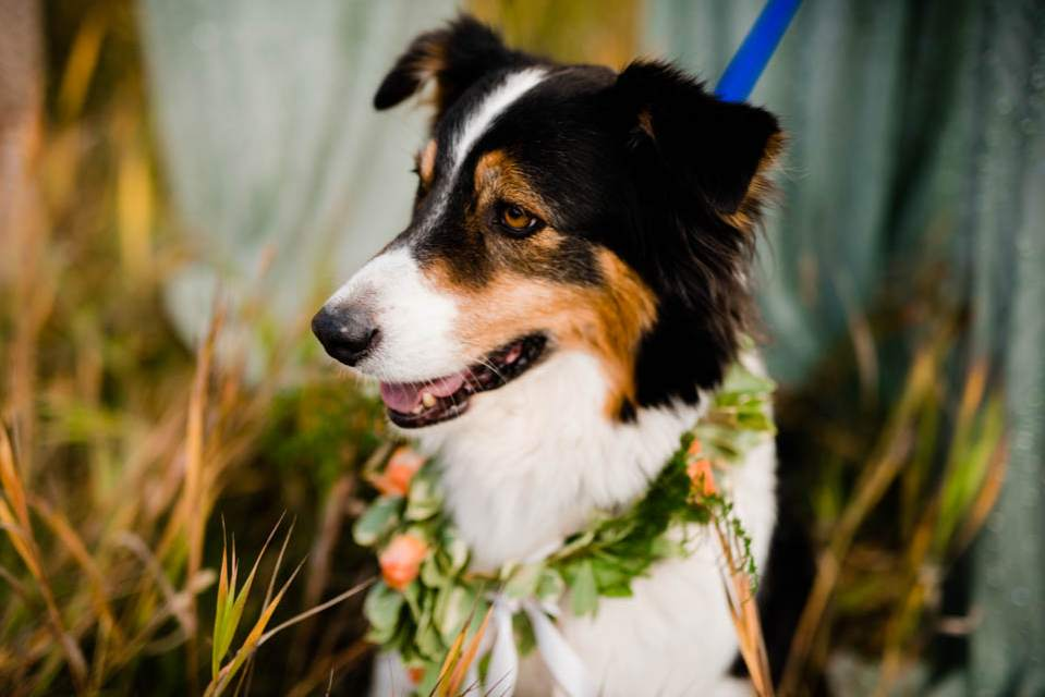 cute dog at wedding ceremony