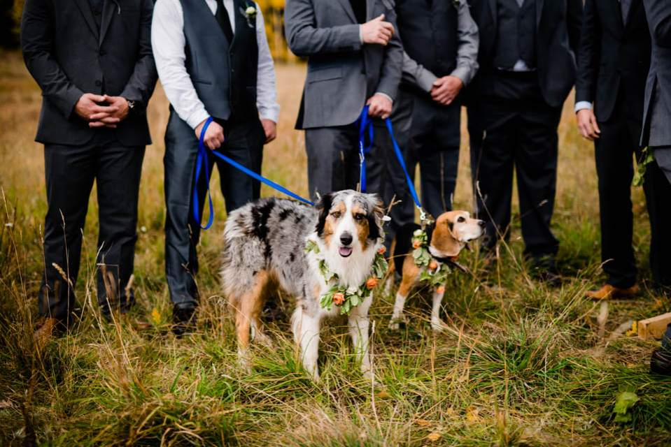 dogs wearing flowers for wedding
