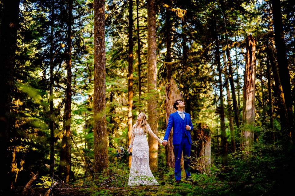 wedding couple looking up at giant trees of olympic national park
